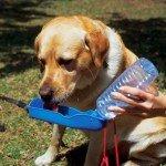 Dog Drinking Water Bottles 250ml Foldable Hand Held Water Dispenser, Pasar Online