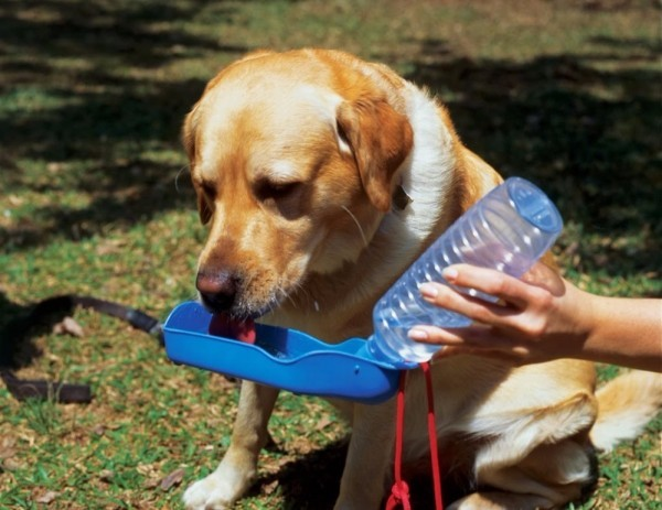 Dog Drinking Water Bottles 250ml Foldable Hand Held Water Dispenser